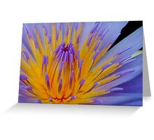 THE BLUE WATERLILY - Nymphaea nouchall. Greeting Card