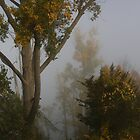 Into The Mist by Lynda   McDonald