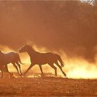 """""""HORSES IN SILHOUETTE"""" at DUSK, RUNNING WILD,RUNNING FREE by Magriet Meintjes"""
