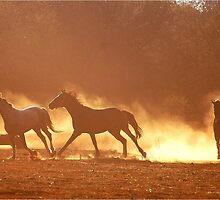 """HORSES IN SILHOUETTE"" at DUSK, RUNNING WILD,RUNNING FREE by Magaret Meintjes"