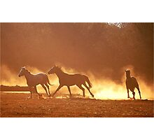 """""""HORSES IN SILHOUETTE"""" at DUSK, RUNNING WILD,RUNNING FREE Photographic Print"""