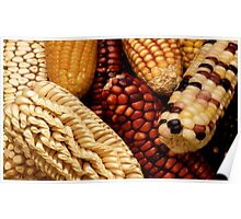 Dried up Fall Corn Poster