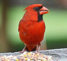 Beautiful Backyard Birds: Part 3 by William Brennan