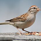 Sparrow by William Brennan