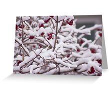 Snow On The Elderberries  Greeting Card