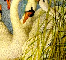 SWANS; A Vintage Painting Print Sticker