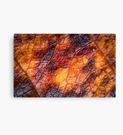 Dragon wing skin Canvas Print