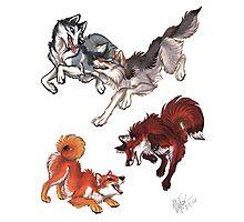 Lookalikes: Husky/Wolf & Shiba/Fox Photographic Print