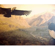 Vultures Photographic Print