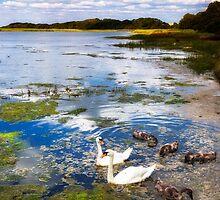River Yar Swans by manateevoyager