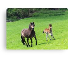 Mother & Foal. Canvas Print