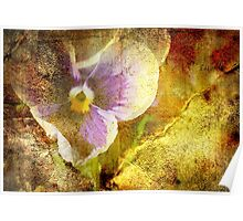 Vintage Pansy Poster