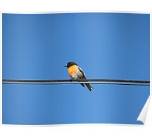 Robin on a Power Line Poster