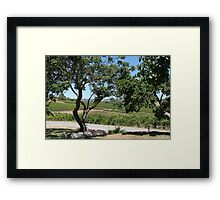 Coriole Winery Framed Print