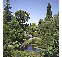 Duck Pond, Botanical Gardens Photographic Print