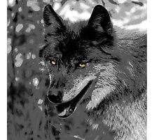 Alpha Male Wolf Photographic Print