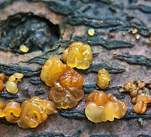 gummy bear poop? by Manon Boily
