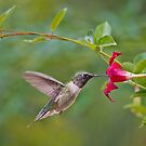 Hummingbird and Red Mandevilla by Bonnie T.  Barry