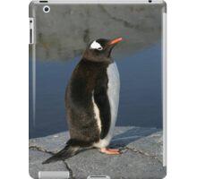 Gentoo Penguin  iPad Case/Skin