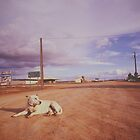Australian Outback dog sitting road Analogue by DavidMay