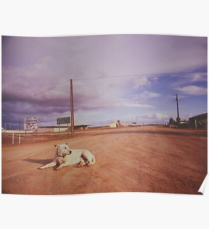 Australian Outback dog sitting road Analogue Poster