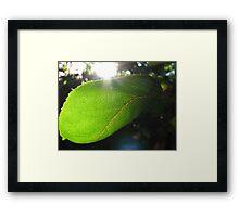 Sunburst in Green - Sunrise through a Leaf Framed Print