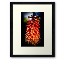 The Red Hot Poker Plant Framed Print