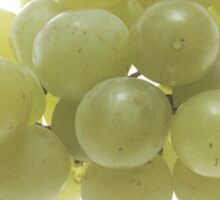 White Grapes  Sticker