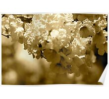 Spring blooms in sepia tones  Poster
