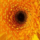 Yellow Flower Tangle FX by MarianaEwa