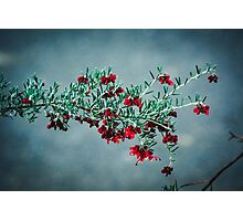 National Botanic Gardens ACT Australia Photographic Print