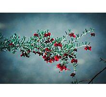 National Botanic Gardens ACT Australia Photographic Print