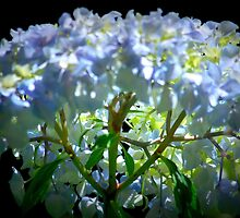 Backlit hydrangea. by Lozzar Flowers & Art