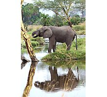 African Elephants, Serengeti National Park, Tanzania.  Photographic Print