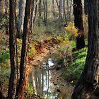 Whipstick Bush Scenery in Winter by Lozzar Landscape