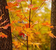 A Touch Of Orange by Mary Carol Story
