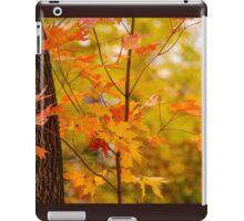 A Touch Of Orange iPad Case/Skin