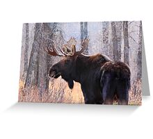 Bull Moose in Teton N.P., Wyoming Greeting Card