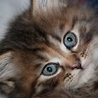 Petit chat by Jean-Marie Polain