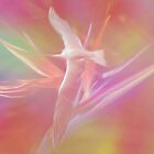 Bird of Paradise by john NORRIS