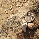 Sea Shells by the Sea Shore by Kezzarama
