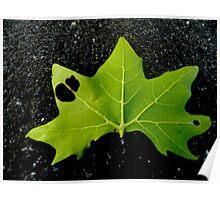 Don't Leaf Poster