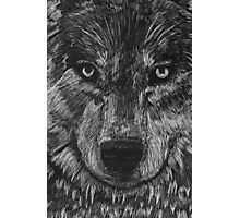 Portrait: Lone Wolf Photographic Print