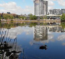 A Day at the Lake, Belconnen, Australia. by kaysharp