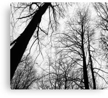 Branches 2 black and white - Ramas 2 blanco y negro Canvas Print