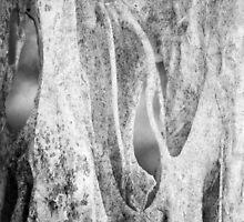 Ghost Tree by olga zamora