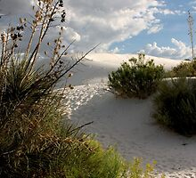 Path Through the Dune by Susan See
