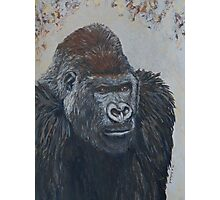 Leader of Gorilla Group Photographic Print