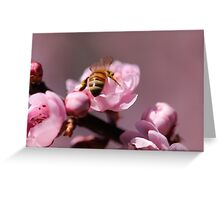 Beautiful blossoms Greeting Card
