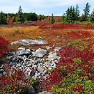The Rocky Trail by Eileen McVey